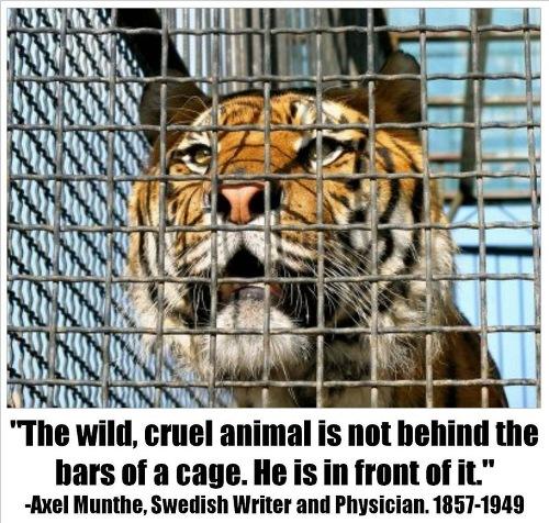 Encaged-cruelty-toward-animals-20